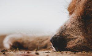 Schlafender Hund mit Ameise Hundeschule Fellnase