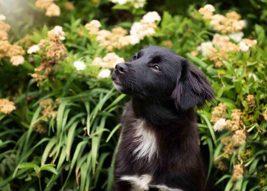 schwarzer hund nero vor blumenbeet Hundeschule Fellnase