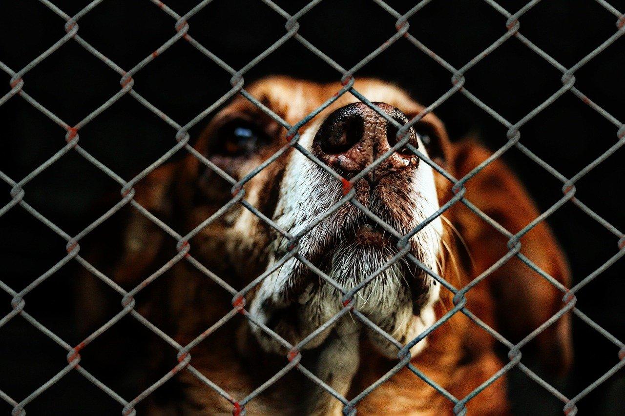 hund in zwinger Hundeschule Fellnase
